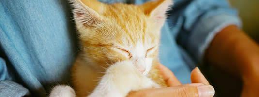 Katzennotfälle suchen ein Zuhause on Germany