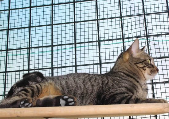 Tierschutz - Katzenvermittlung
