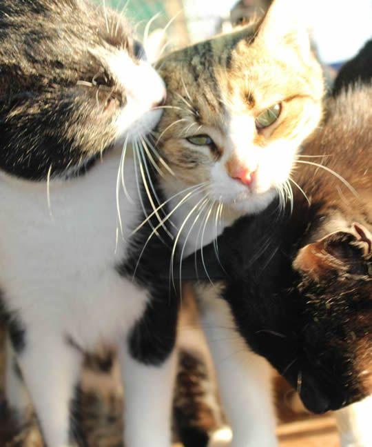 Katzenhoffnung