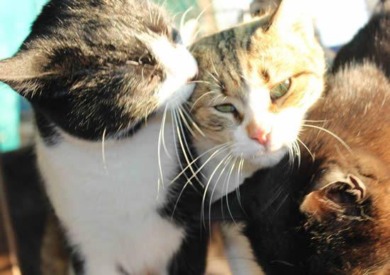 Katzen aus Spanien suchen ein Zuhause - Tierschutz - Katzenvermittlung