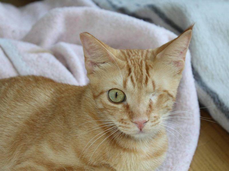 Katzenvermittlung aus Spanien